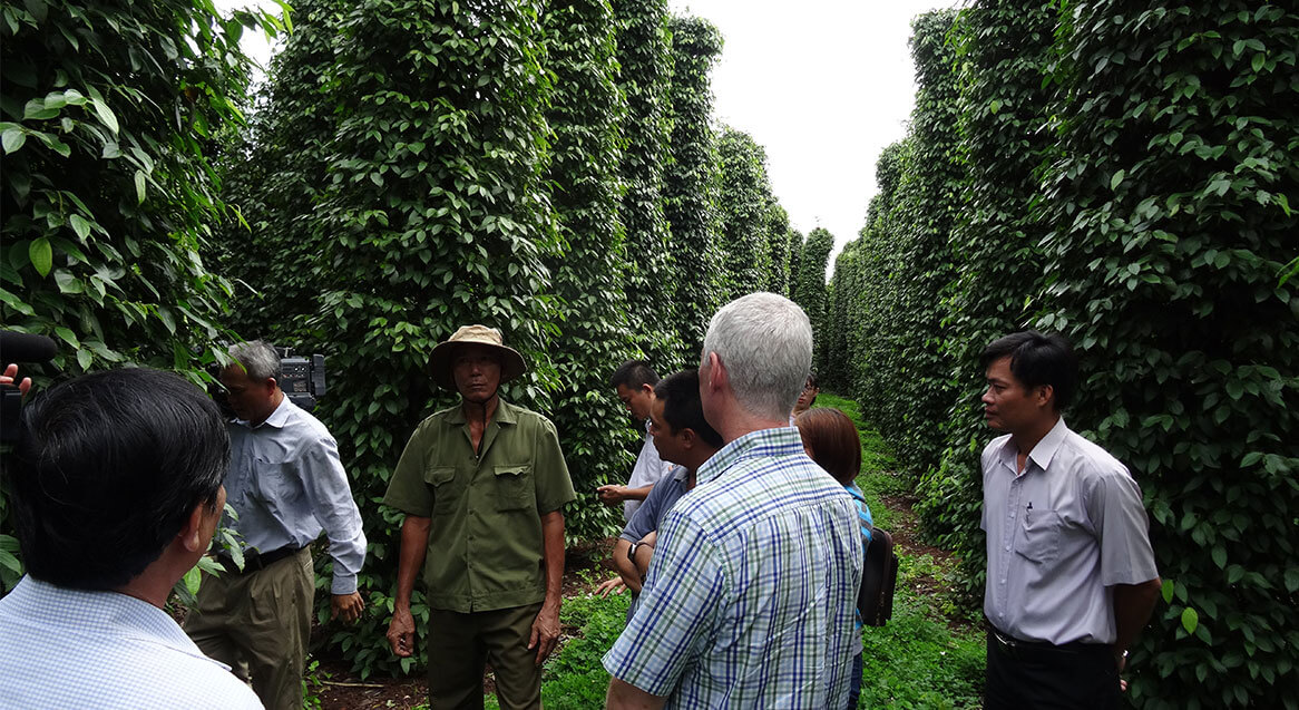Vietnamese pepper farmers in Vung Tau standing in the field discussing sustainable methodologies