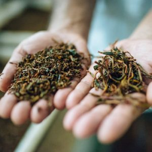 loose-leaf-tea-co-packing-in-usa
